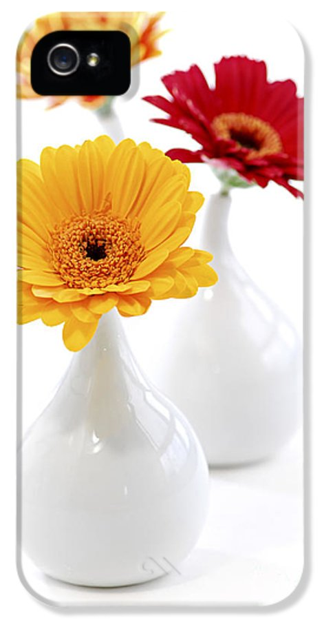 Vase IPhone 5 Case featuring the photograph Vases With Gerbera Flowers by Elena Elisseeva