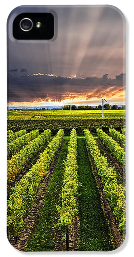 Vineyard IPhone 5 Case featuring the photograph Vineyard At Sunset by Elena Elisseeva