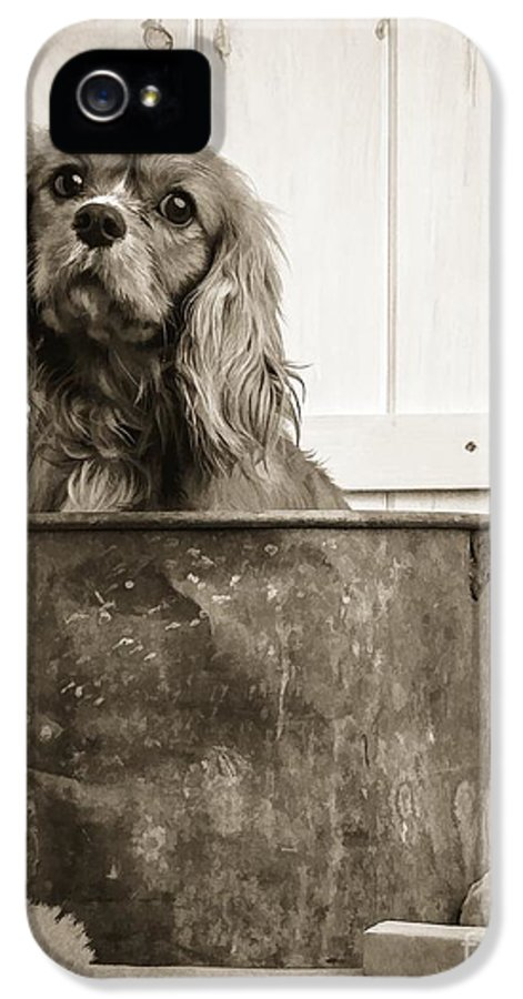 Dog IPhone 5 Case featuring the photograph Vintage Puppy Bath by Edward Fielding