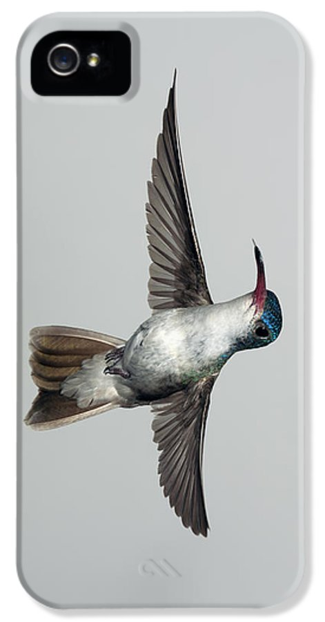 Violet IPhone 5 Case featuring the photograph Violet-crowned Hummingbird - Phone Case by Gregory Scott