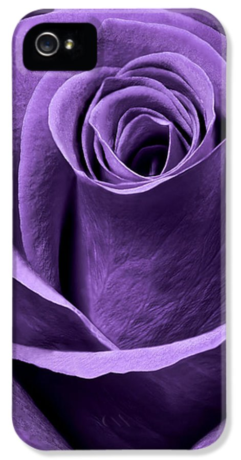 3scape Photos IPhone 5 Case featuring the photograph Violet Rose by Adam Romanowicz