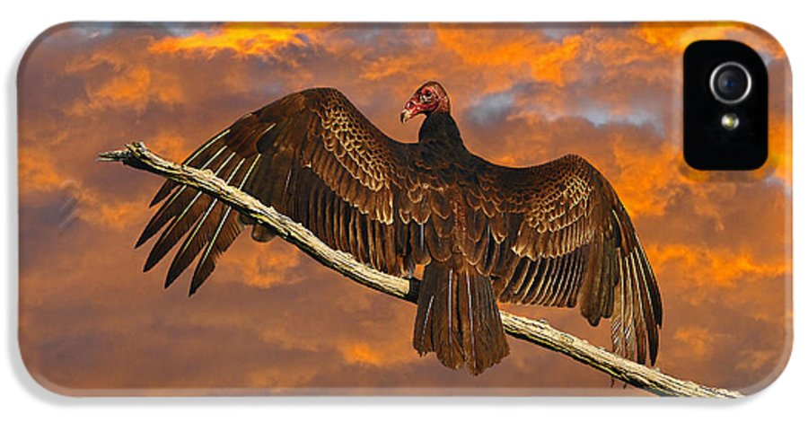 Vulture IPhone 5 Case featuring the photograph Vivid Vulture by Al Powell Photography USA