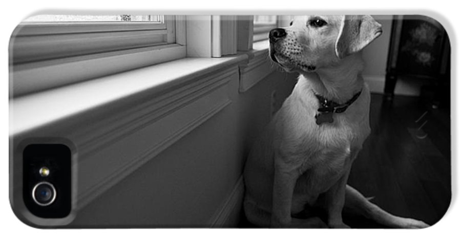 Dog IPhone 5 Case featuring the photograph Waiting by Diane Diederich