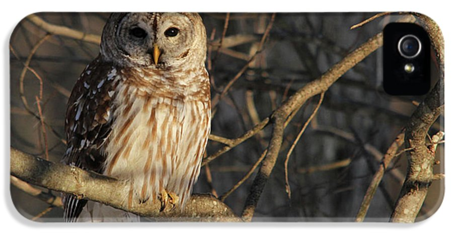 Barred Owl IPhone 5 Case featuring the photograph Waiting For Supper by Lori Deiter