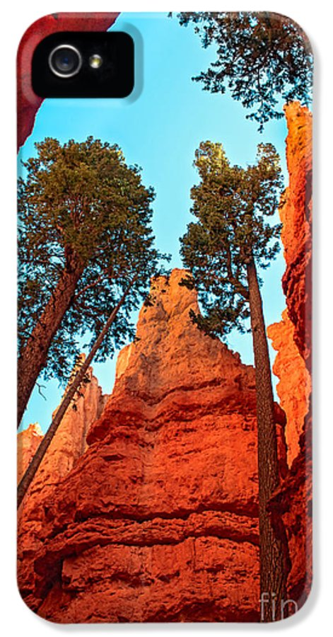 Trees IPhone 5 Case featuring the photograph Wall Street by Robert Bales