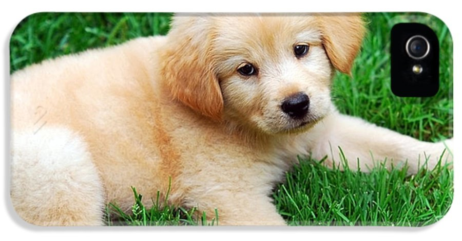 Golden Retriever Puppy IPhone 5 Case featuring the photograph Warm Fuzzy Puppy by Christina Rollo