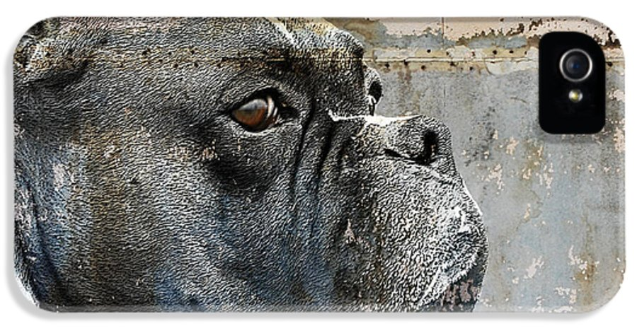 Dog IPhone 5 Case featuring the digital art Watchful by Judy Wood