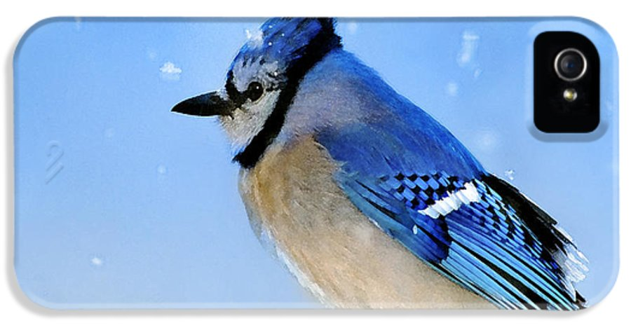 Bluejay IPhone 5 Case featuring the photograph Watching The Snow by Betty LaRue