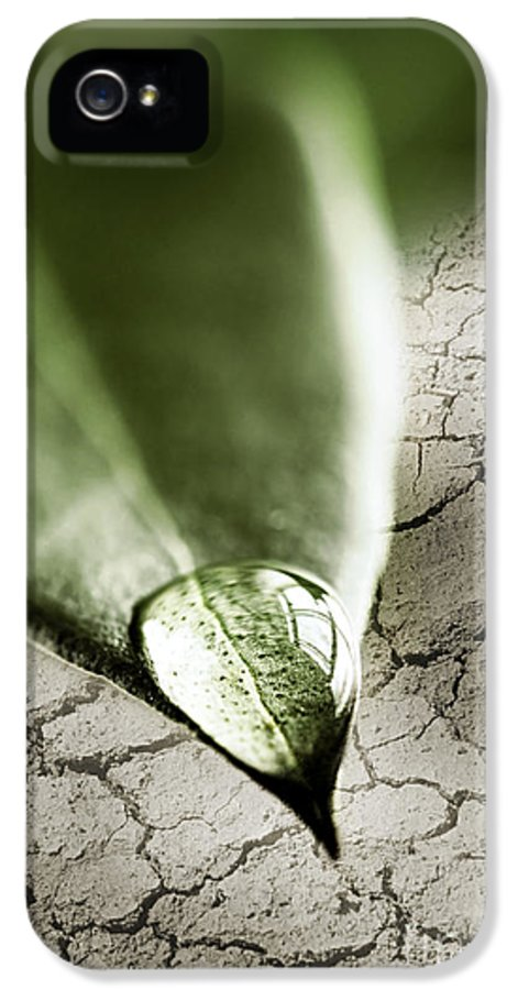 Leaf IPhone 5 Case featuring the photograph Water Drop On Green Leaf by Elena Elisseeva
