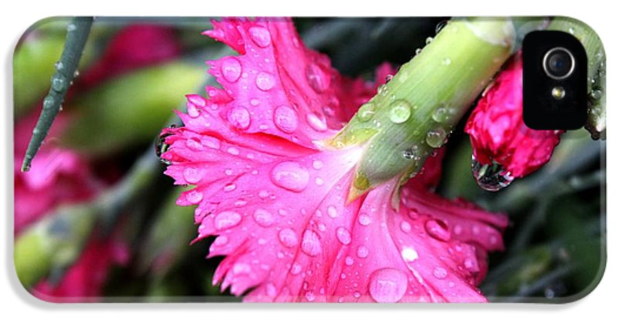 Water IPhone 5 Case featuring the photograph Water Droplets On Carnations by Janice Byer