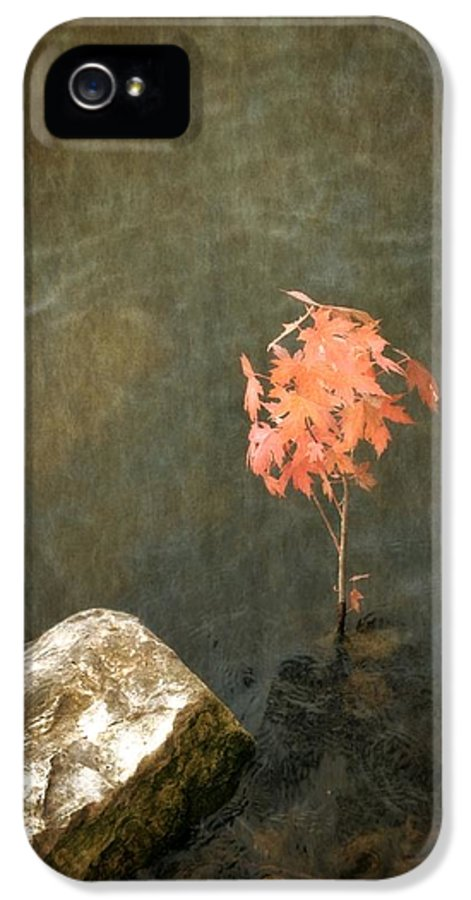 Maple Tree IPhone 5 Case featuring the photograph Water Maple by Michelle Calkins