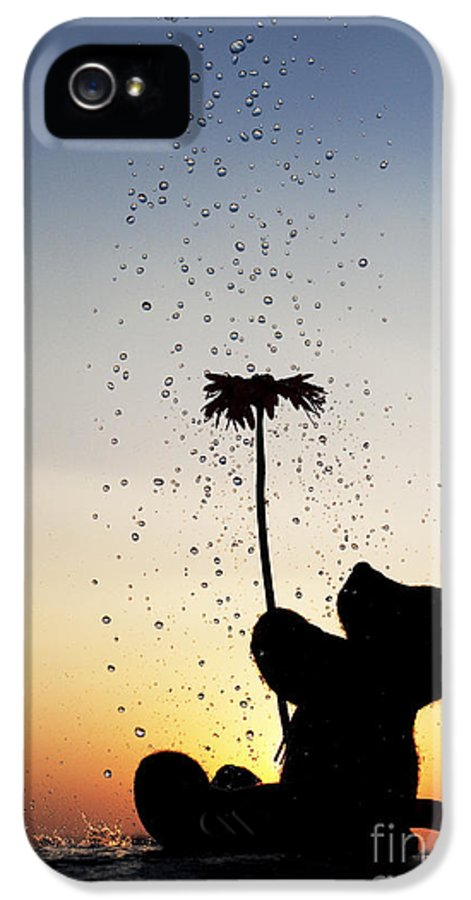 Teddy Bear IPhone 5 Case featuring the photograph Watering A Flower by Tim Gainey