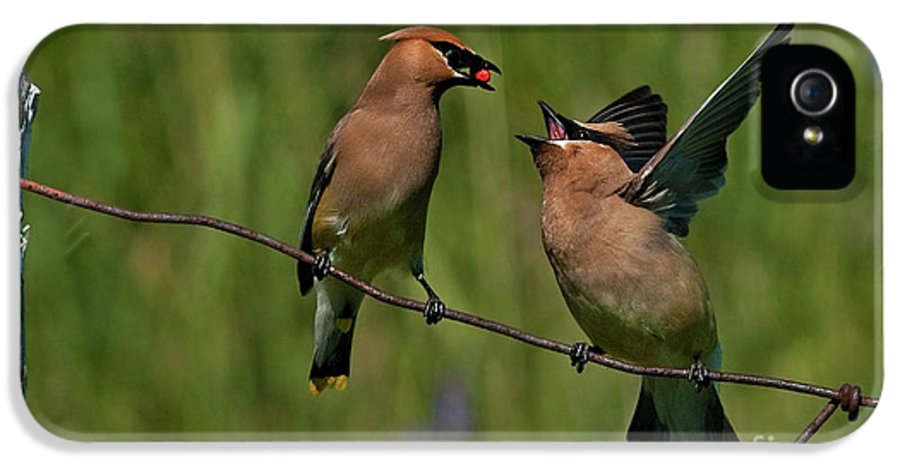 Festblues IPhone 5 Case featuring the photograph Waxwing Love.. by Nina Stavlund