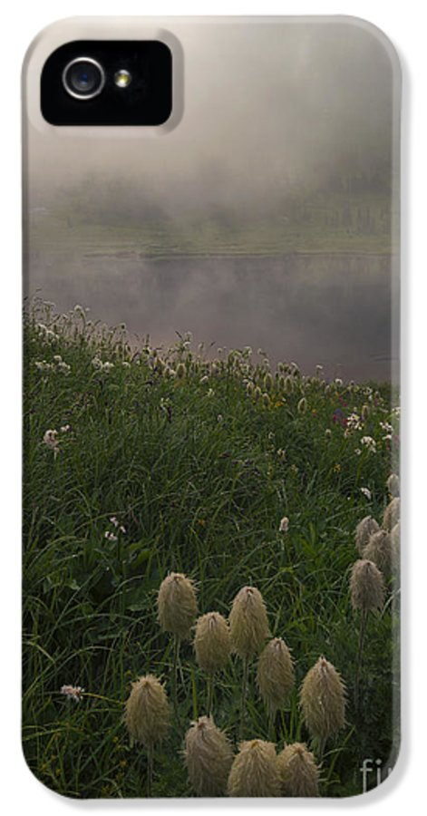 Western Anenome IPhone 5 Case featuring the photograph Western Anenome Dawn by Mike Dawson