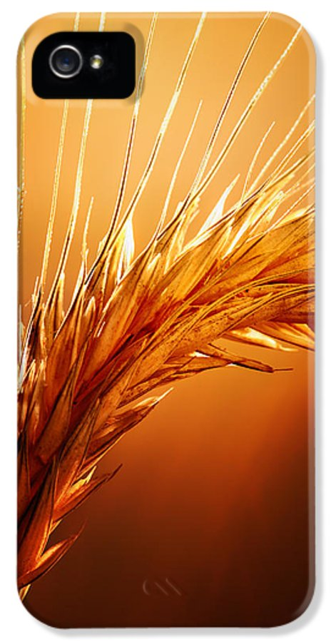 Wheat IPhone 5 Case featuring the photograph Wheat Close-up by Johan Swanepoel