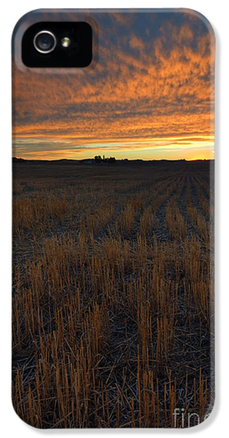 Wheat Stubble IPhone 5 Case featuring the photograph Wheat Stubble Sunset by Mike Dawson