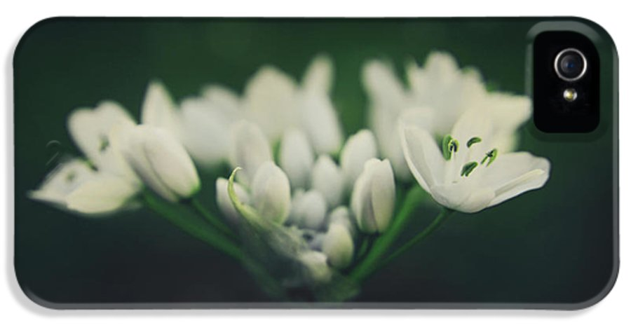 Flowers IPhone 5 Case featuring the photograph When Love Was Young And New by Laurie Search