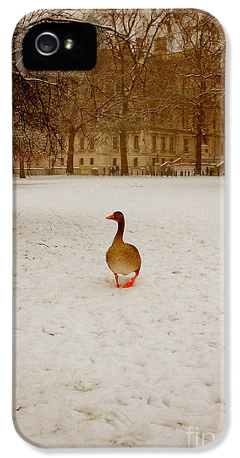 Goose IPhone 5 Case featuring the photograph Where Is Everyone by Jasna Buncic