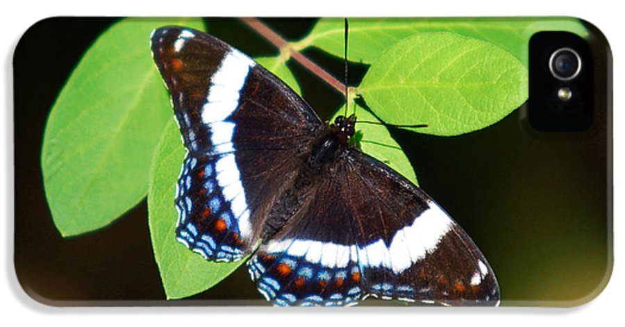 Butterfly IPhone 5 Case featuring the photograph White Admiral Butterfly by Christina Rollo