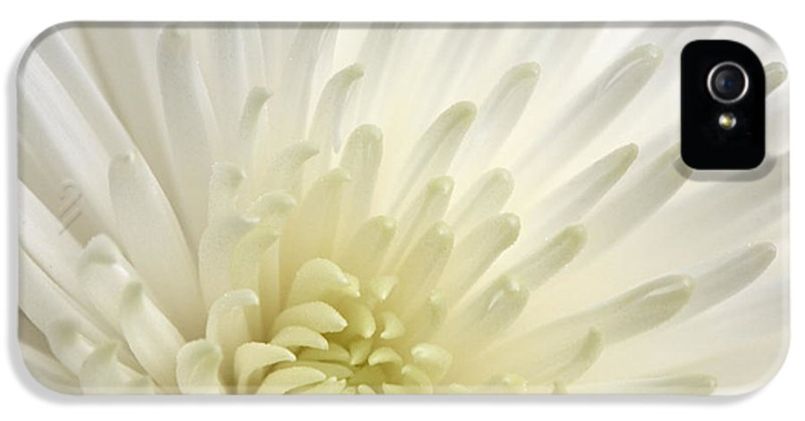 Beautiful IPhone 5 Case featuring the photograph White Chrysanthemum by Deborah Benbrook