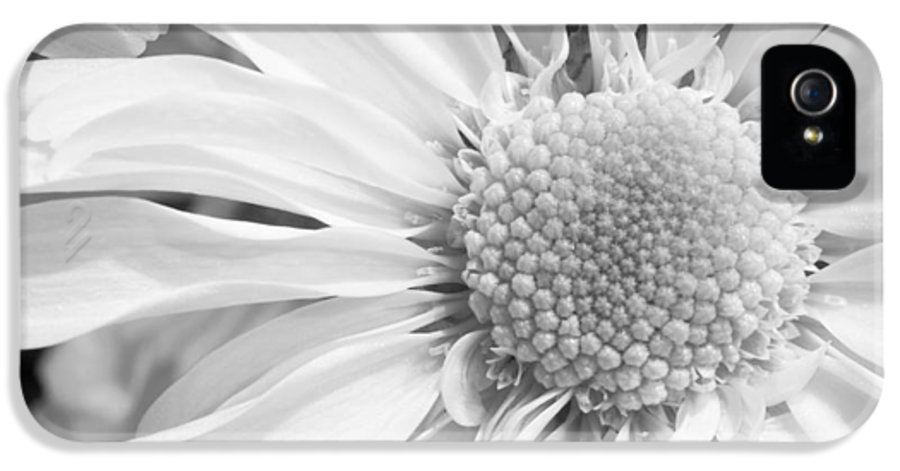 3scape Photos IPhone 5 Case featuring the photograph White Daisy by Adam Romanowicz