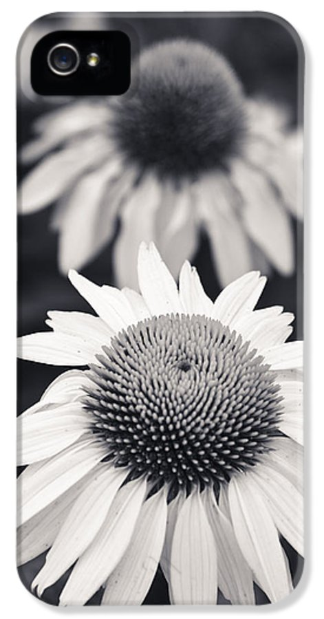 3scape Photos IPhone 5 Case featuring the photograph White Echinacea Flower Or Coneflower by Adam Romanowicz
