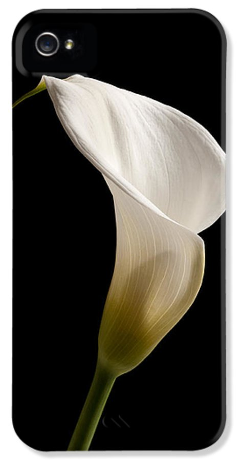 Calla IPhone 5 Case featuring the photograph White Lily by Amanda Elwell