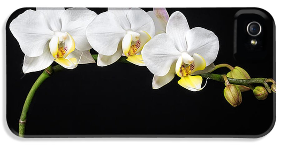 3scape Photos IPhone 5 Case featuring the photograph White Orchids by Adam Romanowicz