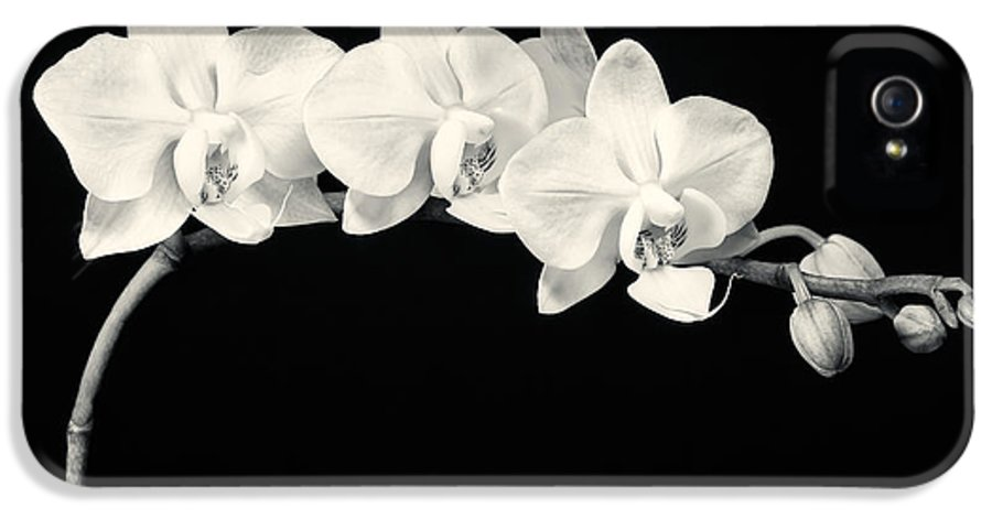 3scape Photos IPhone 5 Case featuring the photograph White Orchids Monochrome by Adam Romanowicz