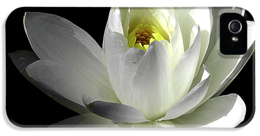 Water Lily IPhone 5 Case featuring the photograph White Petals Aquatic Bloom by Julie Palencia