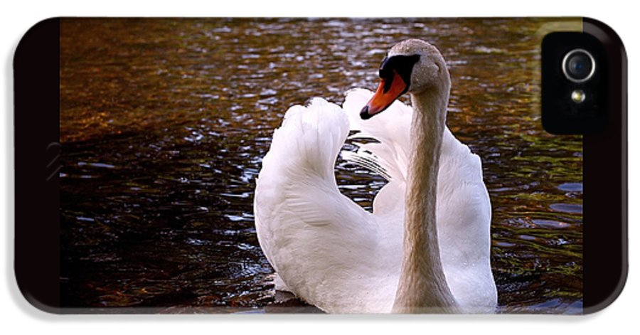 Swan IPhone 5 Case featuring the photograph White Swan by Rona Black