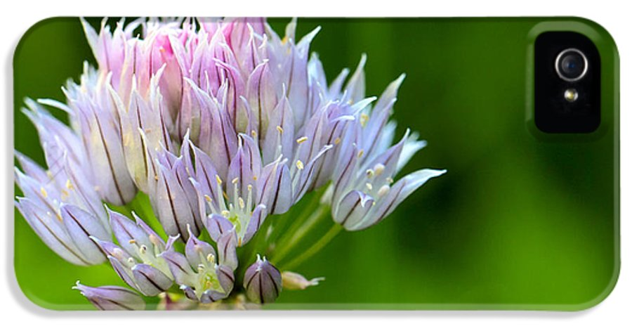 3scape Photos IPhone 5 Case featuring the photograph Wild Blue - Chive Blossom by Adam Romanowicz