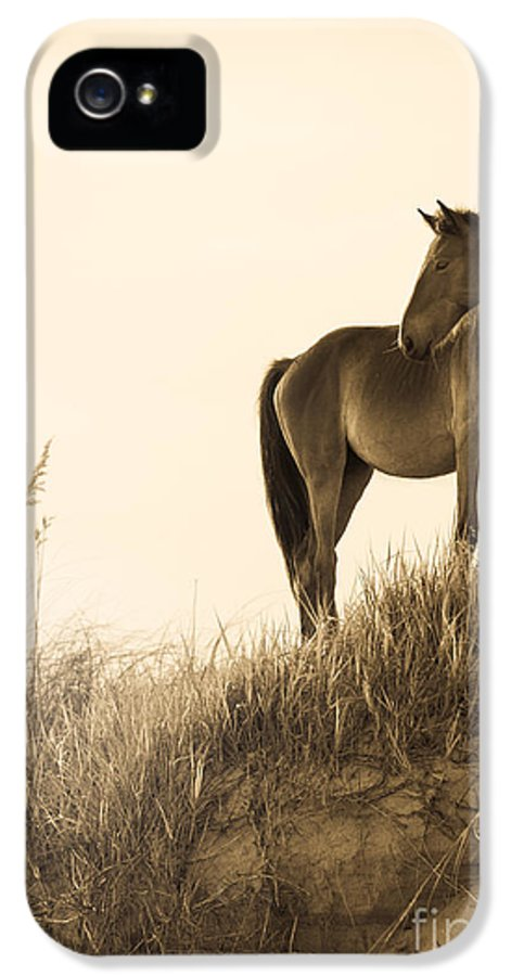 Horse IPhone 5 Case featuring the photograph Wild Horse On The Beach by Diane Diederich