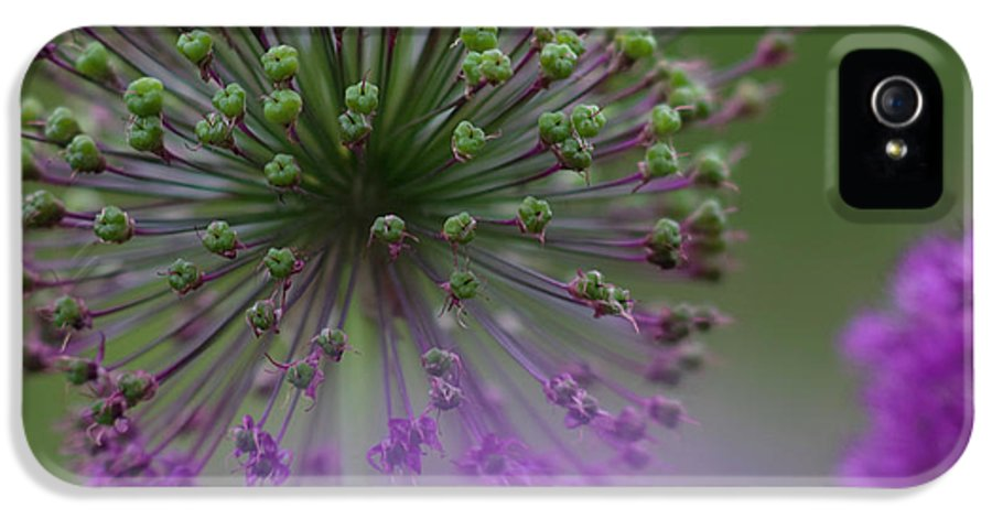 Allium IPhone 5 Case featuring the photograph Wild Onion by Heiko Koehrer-Wagner