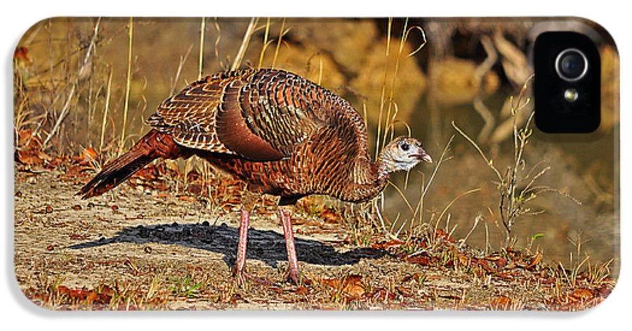 Turkey IPhone 5 Case featuring the photograph Wild Turkey by Al Powell Photography USA
