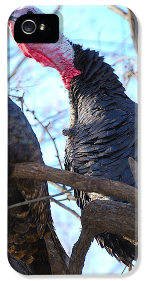 Wild IPhone 5 Case featuring the photograph Wild Turkey Gobbling by Thea Wolff