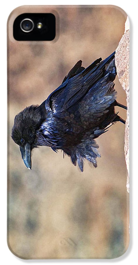 Bird IPhone 5 Case featuring the photograph Windblown Raven - Phone Case Design by Gregory Scott