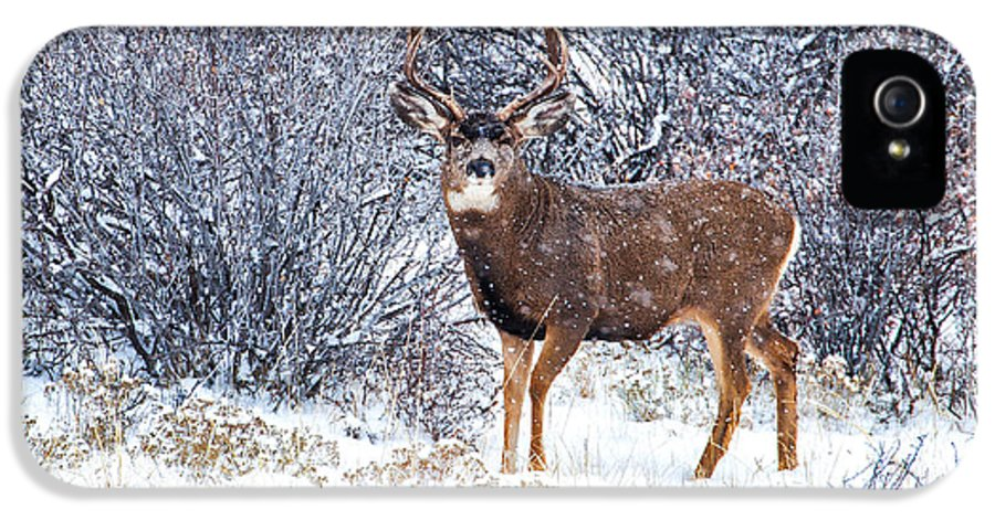 River IPhone 5 Case featuring the photograph Winter Buck by Darren White