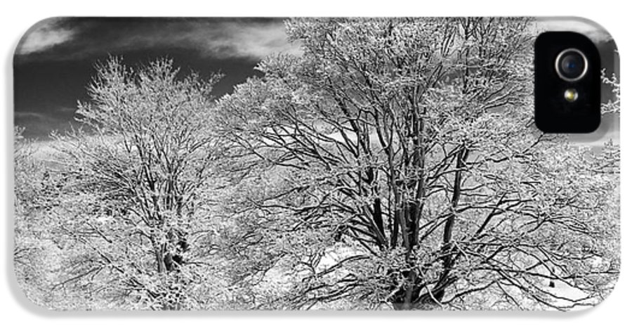 Horse Chestnut IPhone 5 Case featuring the photograph Winter Horse Chestnut Trees Monochrome by Tim Gainey