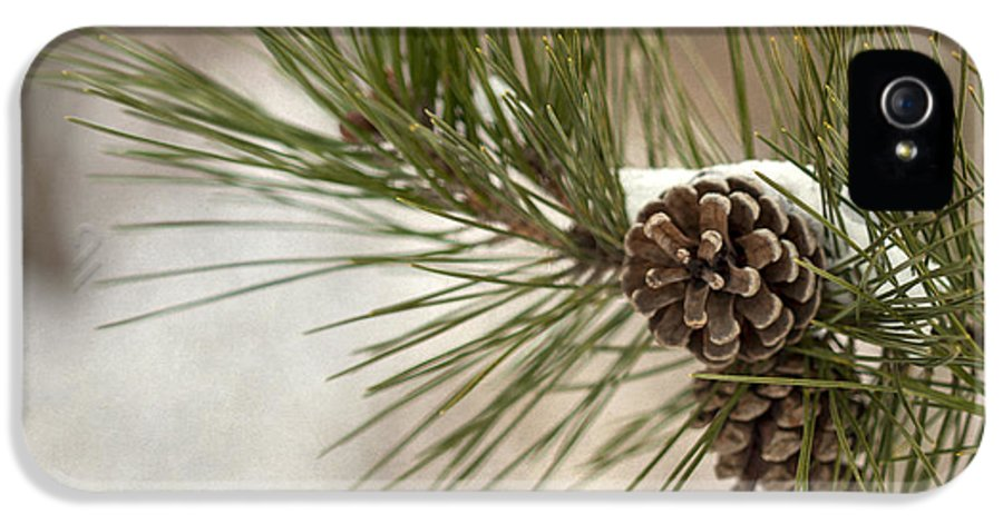 Pine IPhone 5 Case featuring the photograph Winter Interlude by Evelina Kremsdorf