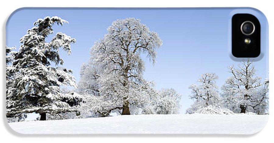 Oak Tree IPhone 5 Case featuring the photograph Winter Tree Line by Tim Gainey