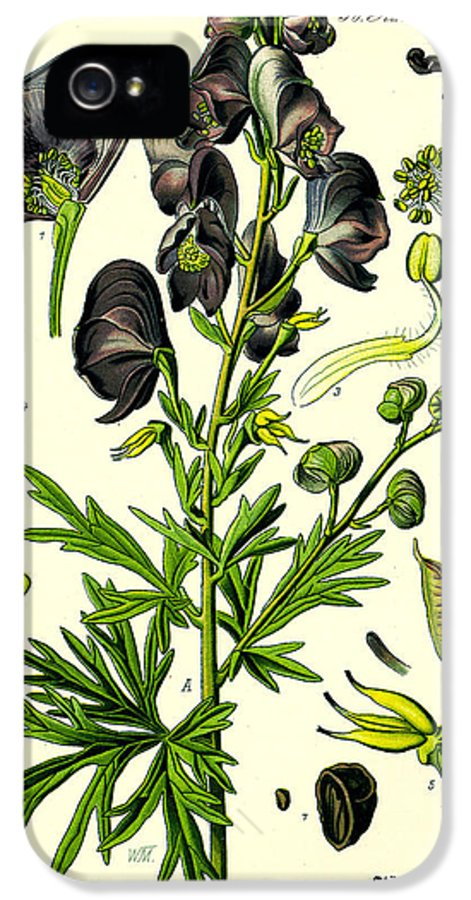 Wolfsbane IPhone 5 Case featuring the digital art Wolfsbane by Georgia Fowler
