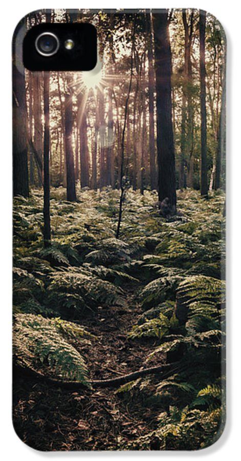 Forest IPhone 5 Case featuring the photograph Woodland Trees by Amanda Elwell