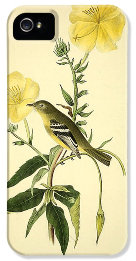 Audubon IPhone 5 Case featuring the painting Yellow-bellied Flycatcher by Philip Ralley