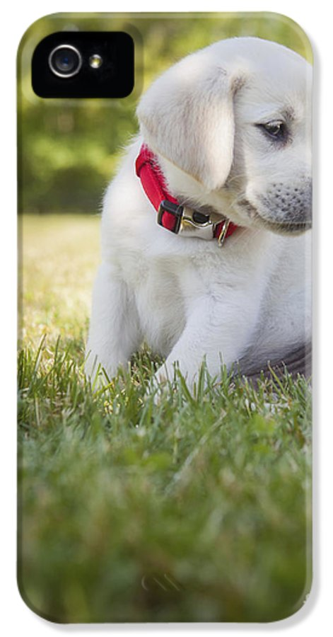 Yellow Lab IPhone 5 Case featuring the photograph Yellow Lab Puppy In The Grass by Diane Diederich