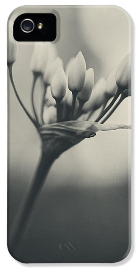 Flowers IPhone 5 Case featuring the photograph You Will Always Be by Laurie Search