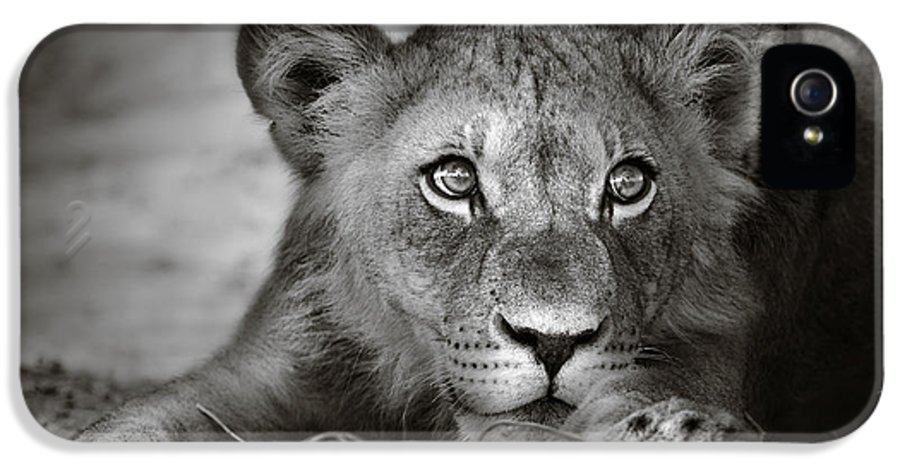Wild IPhone 5 Case featuring the photograph Young Lion Portrait by Johan Swanepoel