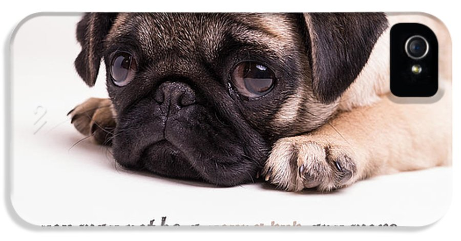Mature IPhone 5 Case featuring the photograph Young Pup by Edward Fielding