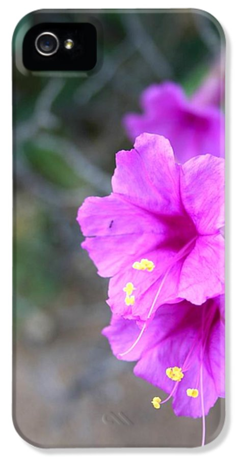 Sharon Mick IPhone 5 / 5s Case featuring the photograph Arizona Wildflower by Sharon Mick