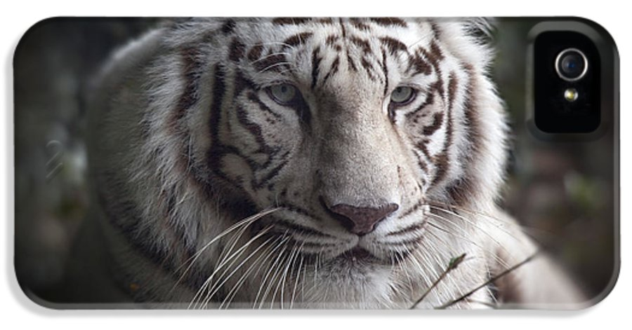 The Tiger's Watchful Eye The Tiger's Watchful Eye The Tiger's Watchful Eye IPhone 5 Case featuring the photograph The Tiger's Watchful Eye by Heinz G Mielke